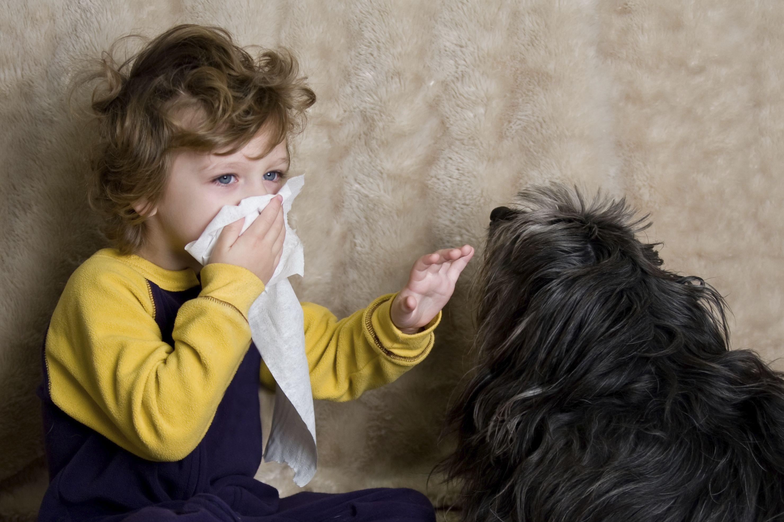 حساسية الحيوانات الأليفة