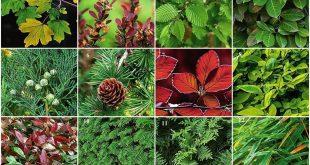 علاج الامراض بالاعشاب