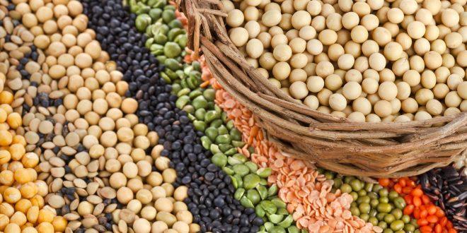 البروتين النباتى