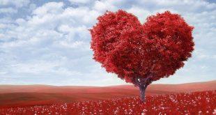 فوائد الحب