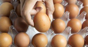 مضار البيض
