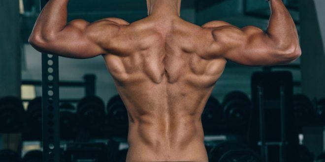 عضلات الجسم